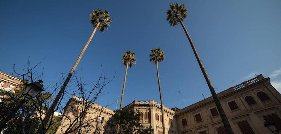 Las palmeras que tocan el cielo de Granada