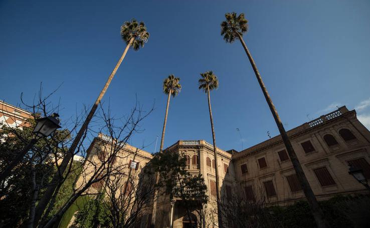 Así son las palmeras centenarias del Palacio de Yanguas