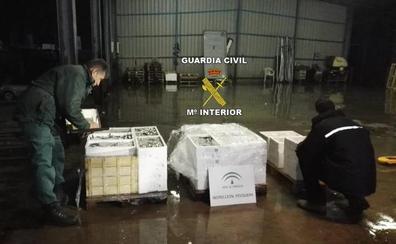 Intervienen 300 kilos de pescado sin etiquetado en Guarromán