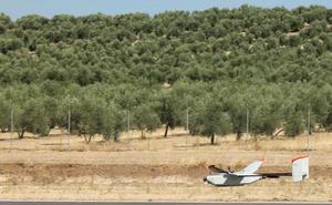El Congreso insta al Gobierno a plantear el olivar patrimonio de la humanidad