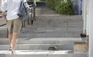 PSOE e IU critican que la ordenanza de mascotas olvida a los gatos callejeros