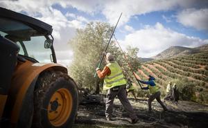 Jaén suma ya 541.000 Tm de aceite a finales de enero