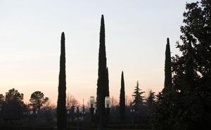 Los altos niveles de polen de ortiga y ciprés castigan a los alérgicos en Granada
