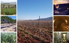 Una ruta por 10 bodegas de la provincia de Granada