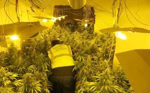 Descubren una plantación de marihuana en una vivienda deshabitada de Alcaudete