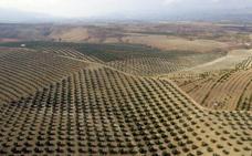 El mundo aceitero de Jaén se apunta al 'juntos más fuertes'
