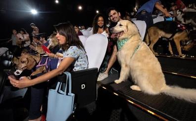 Un cine abre sus puertas a 180 perros de todos los tamaños