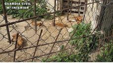 Denunciado 60 veces un vecino de Cazorla por maltrato animal