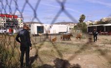 El circo se va de Motril sin subir el telón: el Ayuntamiento revoca el permiso por llevar animales