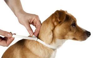 ¿Cómo elegir un buen collar antiparasitario para tu perro o gato?