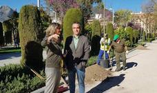 Plantan 50 árboles en el parque de la Alameda, reformado en 2015