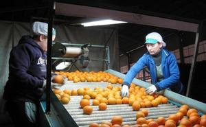 Cajamar pone en marcha un plan de apoyo al sector citrícola con 350 millones