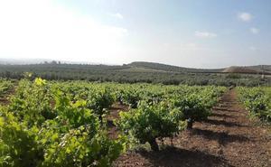 Un encuentro internacional recupera la historia de la vid en Al Andalus