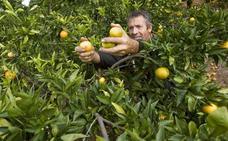 Grupo Cajamar dispone 350 millones de euros para apoyar al sector citrícola