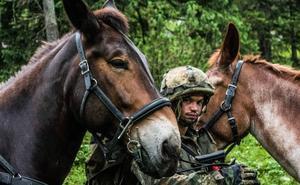 Las mulas murcianas que trabajan para la OTAN