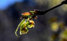 Así luce ya la primavera en Granada