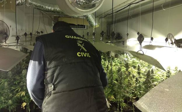 La Guardia Civil interviene 12.865 plantas de cannabis en Granada en un sólo mes