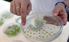 El proyecto Naturpick 'invita' a los investigadores a lograr alimentos más fortificados