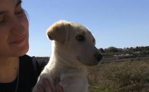 Los Bomberos rescatan a un cachorro que llevaba dos días atrapado en un agujero