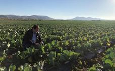 Crece la demanda de productos ecológicos en los consumidores