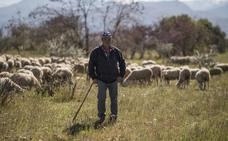 Francisco vuelve a la Alhambra con sus ovejas