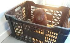 La Policía busca al individuo que ha abandonado un cachorro en un centro comercial de Motril