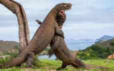 Turistas que van a la caza del dragón
