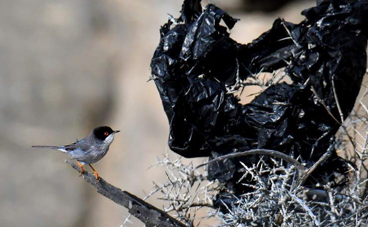 Plásticos de invernadero, vertidos que matan