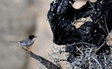 Plásticos de invernadero, pena de muerte para los ecosistemas