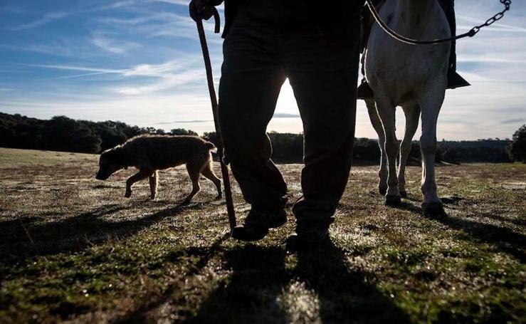 Las espectaculares fotografías de la trashumancia de ganado en el altiplano de Granada