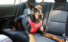 Si te gusta viajar en coche con tu mascota, así es como debes llevarla