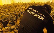 942 plantas de marihuana intervenidas en 3 localidades de Granada en un solo día