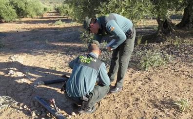 Investigan el robo de 10.600 kilos de aceituna amparados en la rebusca