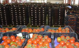 El tomate marca los mejores precios de las pizarras en la primavera hortícola