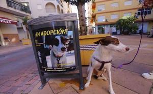 El 'Día del perro' se celebrará en Salobreña con adiestramiento y un concurso para buscar al más guapo