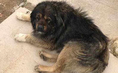 Piden ayuda para encontrar a un perro robado en Cogollos Vega (Granada)