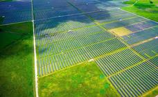 Cinco proyectos de BBVA, elegidos por su impacto en los Objetivos de Desarrollo Sostenible de la ONU