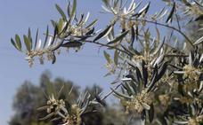 El calor coloca ya el polen en nivel alto e irá a más