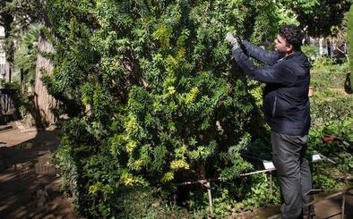 La planta que resucitó en Granada