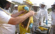 Almería domina la apicultura andaluza con 1.500 toneladas de producción de miel