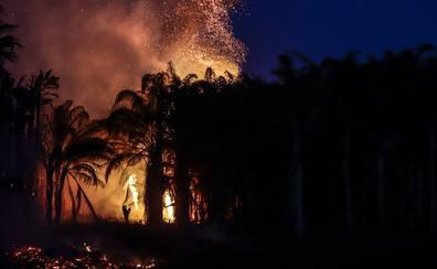 'Cazado' un hombre cuando prendía fuego a un palmeral junto al centro comercial de Motril