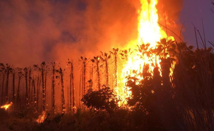 Espectacular incendio en unas palmeras a la entrada de Motril