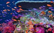Un millón de especies de la Tierra corren grave riesgo de desaparecer