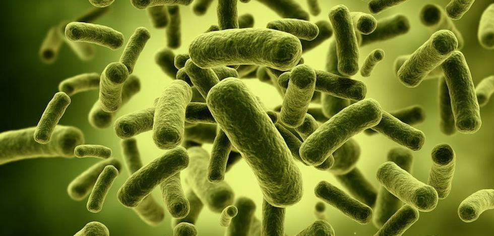 ¿Qué es la bacteria 'Klebsiella pneumoniae'?