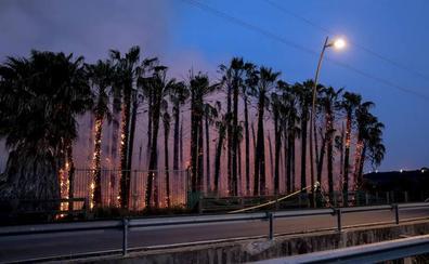 El fuego arrasó en Motril un millar de palmeras valoradas en unos 100.000 euros