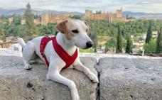 Pipper llega a Granada para promocionar los viajes con mascotas