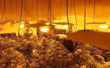 Intervienen casi 15.000 plantas de marihuana en abril en la provincia de Granada