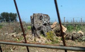 El cambio climático en el olivar y la Xylella, a examen en el foro