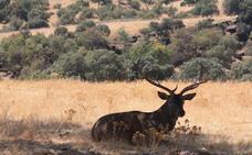 La Junta diseña un plan para la caza sostenible como motor económico en el mundo rural