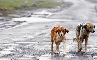 Adopta un perro callejero, le muerde y muere infectada por la rabia